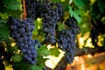 Trip naar het wijnland van Napa en ...