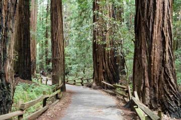 Tur til Muir Woods og Sausalito pluss cruise i San Francisco-bukta
