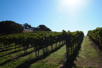 Visita privada: Excursión de un día a la región vinícola desde San...