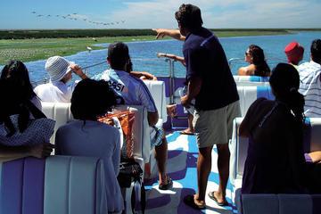 Ilha Deserta - Excursão guiada pela natureza - Ria Formosa