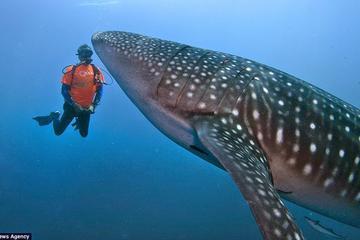 Whale Shark Encounter in Cancun