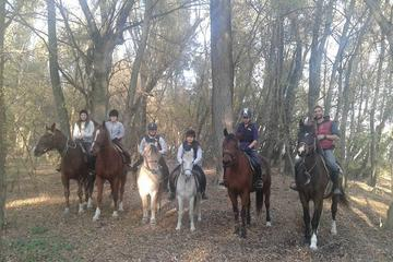 Horse Riding Camp near Budapest for Adults and Children