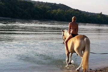 Private Horse Riding near Budapest with Lunch