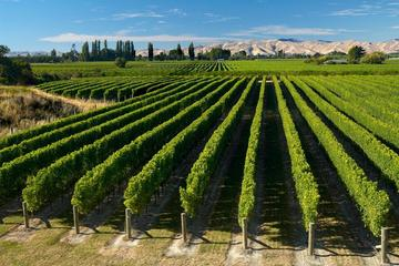 Half-Day Marlborough Wine Region Tour