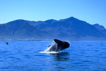 Whale Watching Private Day Tour to Hermanus from Cape Town