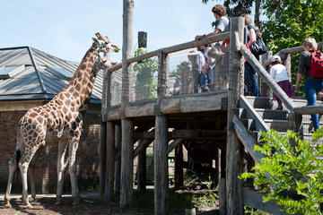 Inträdesbiljett till London Zoo med valfri snabbinträdesuppgradering