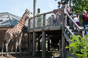 London Zoo mit optionalem Keine-Warteschlange-Upgrade