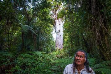 Waipoua Forest Daylight Walk with...