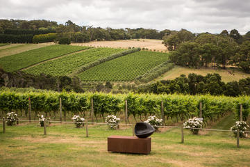Mornington Peninsula Discovery Wine Tasting and Lunch