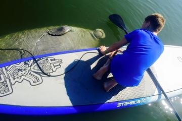 Day Trip Paddle Board or Kayak Eco Manatee Tour near Cocoa Beach, Florida