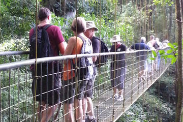 Rainforest Skywalk and Tarcoles River...