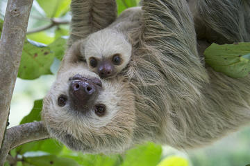 Sloths Lovers
