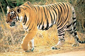 Rajasthan Wildlife Safari Tour