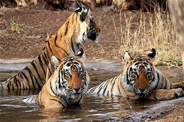 Ranthambore Day Trip from Jaipur