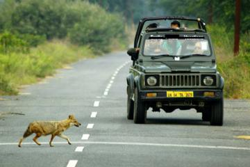 Exclusive Private Gypsy Safari in an Ranthambore National Park