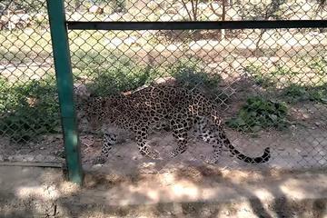 Sajjangarh Biological Wildlife Sanctuary Admission Ticket with Optional Transfer