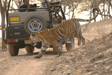 Special Excursion to Ranthambore Day Trip from Jaipur