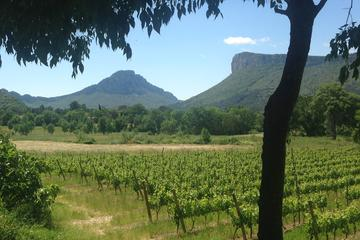 Pic St Loup Wine Tour including Homemade Lunch from Montpellier