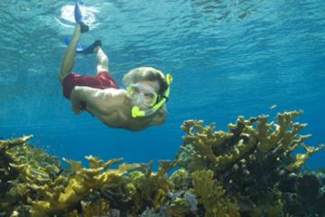 Excursion au bord de mer à Nassau: Aventure de plongée avec un tuba...
