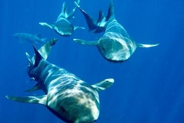 Landausflug in Nassau: Mit Haien tauchen