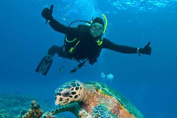 Nassau Shore Excursion: 2-Tank Dive...