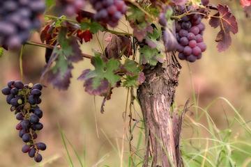 4-Hour Wine Tour from Santa Barbara