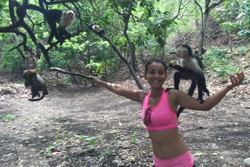 Monkey Tour Adventure