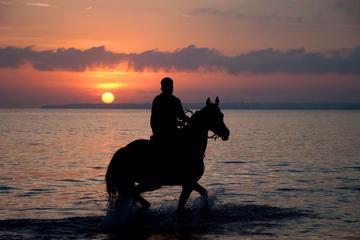 Puerto Plata Sunset Beach Horseback Riding with Dinner