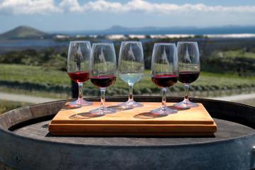 Tour privato: Degustazione di vini a Bologna