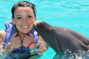 Baño con delfines típico en Nuevo Vallarta