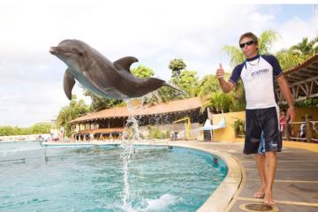 Entrenador de delfines por un día en Nuevo Vallarta