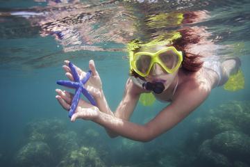 Îles Marietas: baignade dans une grotte et plongée libre au départ...
