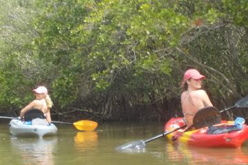Day Trip Fully Guided Kayaking Backwater Manatee and Dolphin Tour near Cape Canaveral, Florida