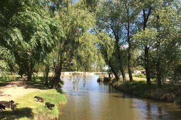 San Antonio de Areco and Lujan Day Trip from Buenos Aires