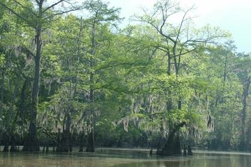 Day Trip Private Tour of the Honey Island Swamp near Slidell, Louisiana