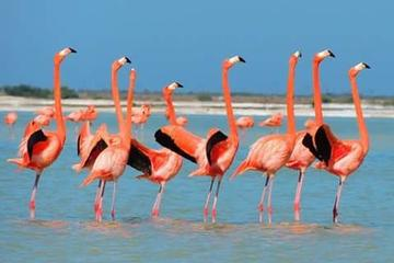 Private Tour: Flamingos, Mayan