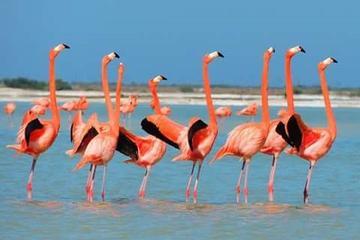 Private Tour: Flamingos, Mayan...