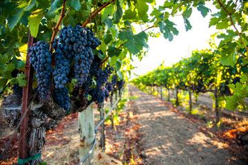 Excursão de vinho de limusine particular por Napa Valley ou Sonoma...