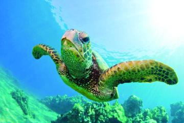 Cruzeiro com mergulho com snorkel no...