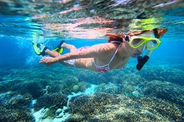 Halfdaagse dolfijn- en snorkelcruise langs de beschutte kust