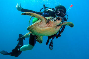 Scuba Diving for Beginners on the...