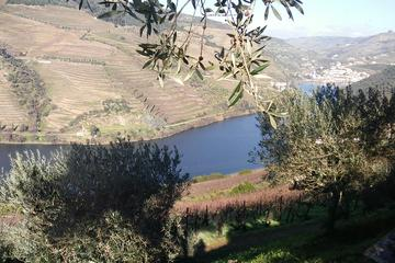 Douro Valley Private Day Trip from Porto with Lunch and Wine Tasting