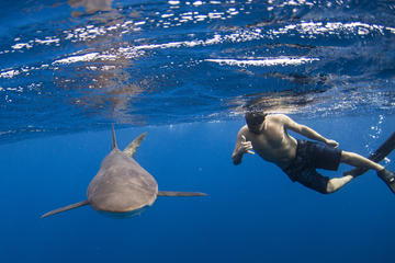 Snorkeling or Scuba Diving  with Sharks in Cabo San Lucas