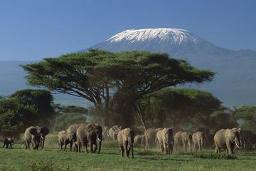 3-Day Amboseli National Park Safari from Nairobi