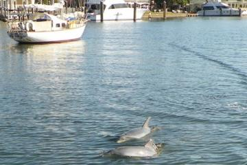 Day Trip Private Tour: Dolphin and Manatee Sightseeing from Cocoa Beach near Cocoa Beach, Florida