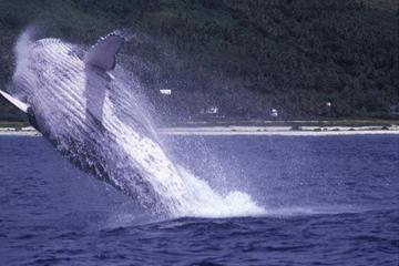 Crucero de avistamiento de ballenas en Tahití