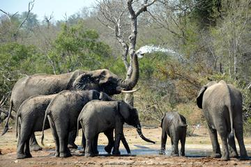 4-Day Wild Life Safari Tour of Kruger...