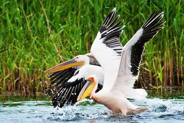 Discover Wildlife from Danube Delta...