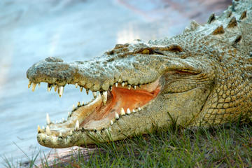 Book Gatorland Ticket with Transport on Viator