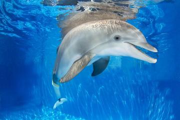 Viagem de um dia para o Clearwater Marine Aquarium saindo de Orlando